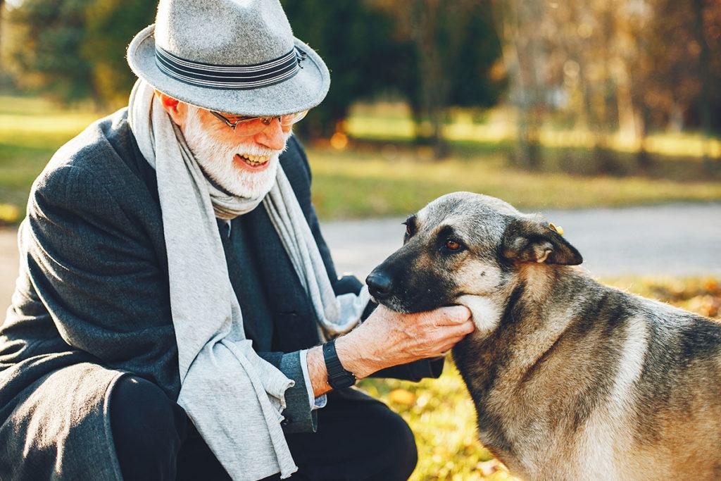 犬を飼うと長生きできる!健康のために良い4つの理由