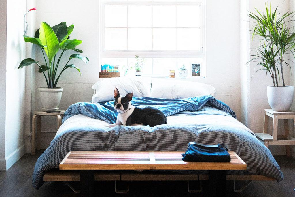 犬を飼う!ペット可の物件に入居するためにクリアしたい条件とは?【ペットの面接】