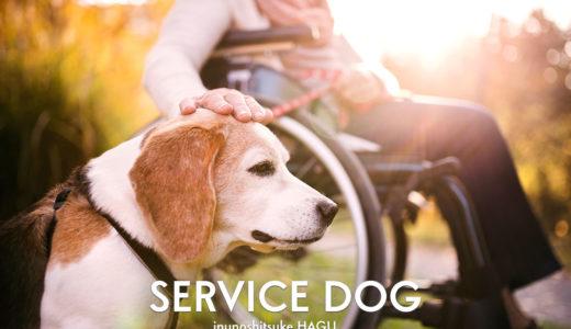 補助犬ってどんな犬?補助犬の仕事と訓練について知ろう!