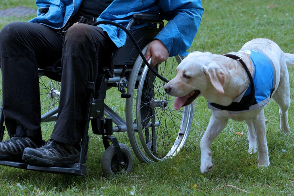 補助犬の種類とお仕事内容 介助犬の仕事