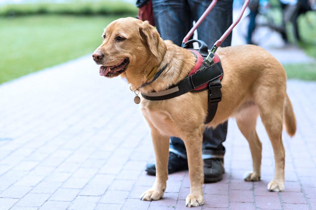 補助犬の種類とお仕事内容 盲導犬の仕事