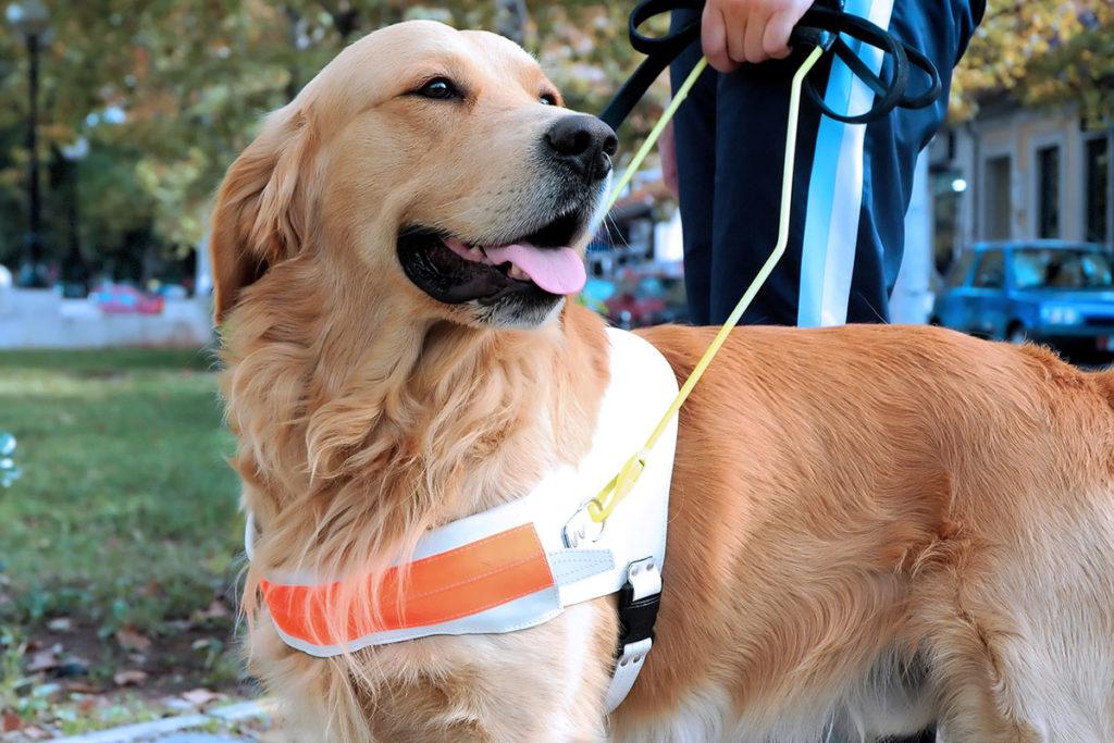 補助犬の種類とお仕事内容 聴導犬のお仕事