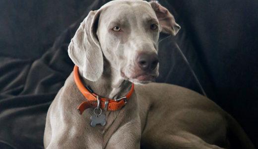 犬の内耳炎とは?内耳炎の原因・症状治療・予防策