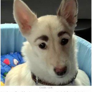 立派な太眉が目を引く迷い犬!保護施設から新しい飼い主の元へ!