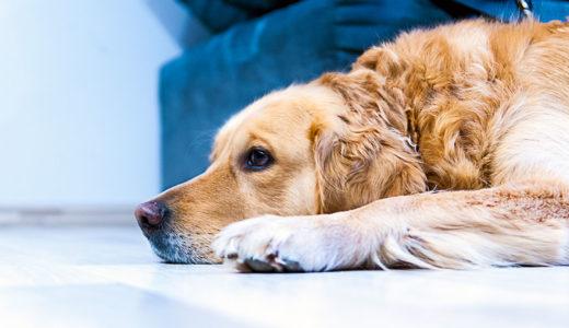犬の息が荒くて苦しそう!息が荒くなる理由と対処法【病気のサイン】