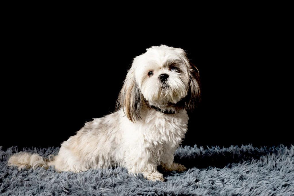 天罰方式の犬のしつけはおすすめできない?犬の困った吠えや噛み癖を治す方法