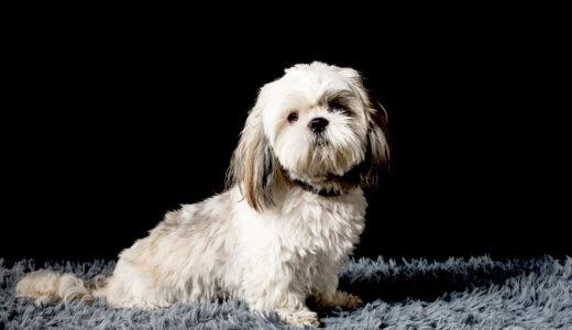【ドックトレーナー監修】天罰方式の犬のしつけはおすすめできない?犬の困った吠えや噛み癖を治す方法