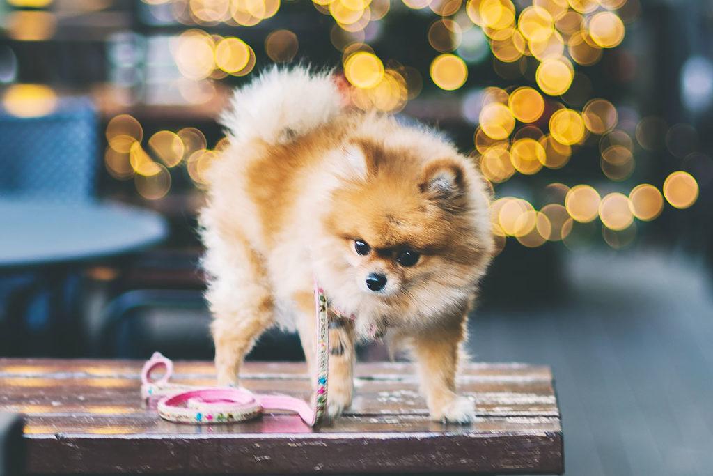 散歩嫌いの犬をダイエットさせる秘訣5つ! 散歩で健康キープ!