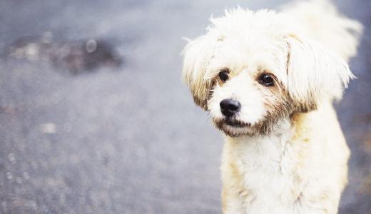 犬はなぜ穴を掘るの?穴掘り行動をする理由と対処法【ストレスとは】