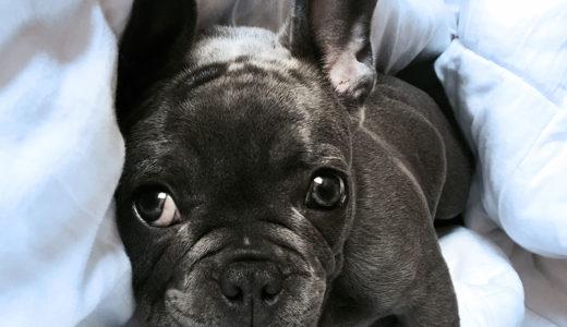 犬の口が臭くなるのはなぜ?口臭の原因と対処方法