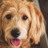 犬のダイエットでおからを与えても平気?気を付けるべきことは?