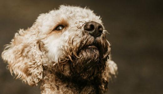犬にはわかってしまう?!【共感力】飼い主さんの嬉しい気持ち・悲しい気持ち