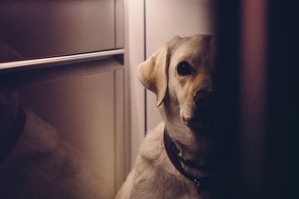 残された愛犬はどうなるの?お別れする前に飼い主さんに出来る事とは?