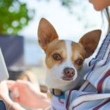 犬の問題行動の原因は飼い主さんかも?!意識改革で愛犬が変わる!