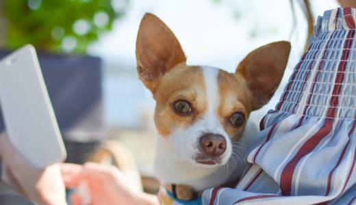 【ドックトレーナー監修】犬の問題行動の原因は飼い主さんかも?!意識改革で愛犬が変わる!