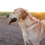 ヘッドプレスって何?犬の奇妙な行動は病気のサインって本当?