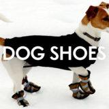 犬が靴や靴下を履くのは常識になる?!靴を履かせるメリット・デメリットとは?