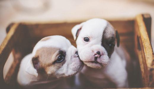 人気のある犬を飼いたい!初心者には飼うのが難しい犬種があるのはホント?!