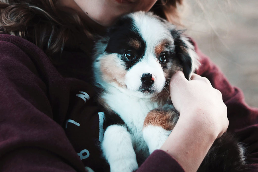飼い主さんの意識向上へ!犬との正しい関わり方とは?