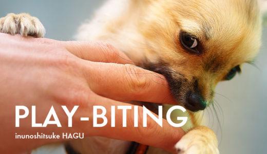 犬の噛み癖は3種類!タイプ別噛む理由とその改善方法【具体的にご紹介】