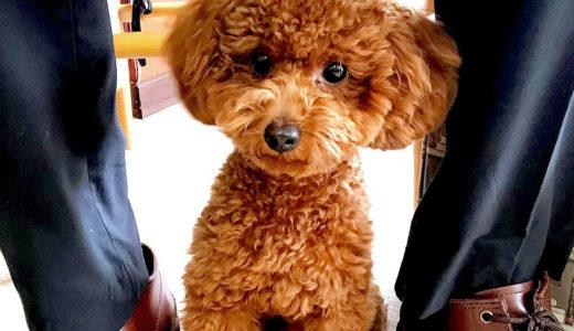 犬が飼い主さんの足の間に挟まりたい5つの理由!乗りたい理由とは?