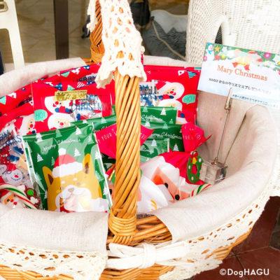 東京の世田谷区と文京区にある犬のしつけ経室、ドッグホテル犬のしつけハグのクリスマス犬 ワンコ プレゼント