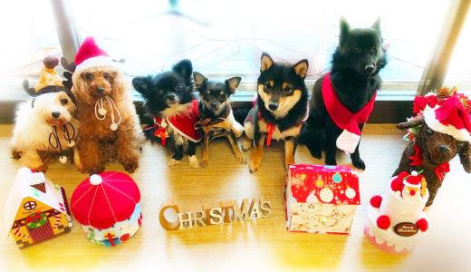 わんこ クリスマス2019【犬のしつけHAGU】ワンコ写真
