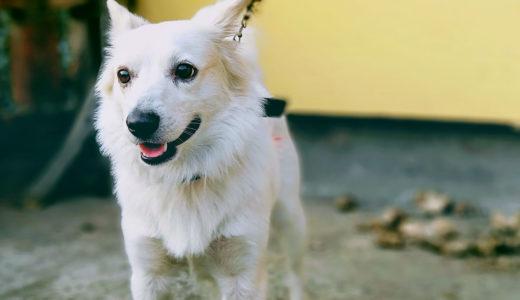 犬も膀胱炎になる?!膀胱炎を見つける方法と飼い主さんに出来る事とは?