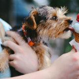 アイスを犬に与えても平気?|犬用のアイスの作り方も解説