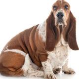 犬の肥満に注意!肥満度のチェック方法と改善方法