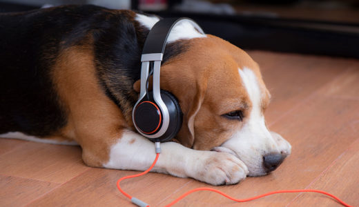 【獣医師 検証】犬にリラックス効果のある音楽を探してみた!