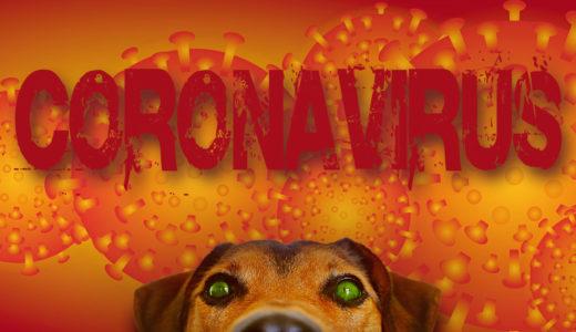 愛犬が新型コロナウイルスに感染する可能性はあるの?