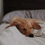 犬の夜鳴きをなんとかしたい!原因究明と解決方法