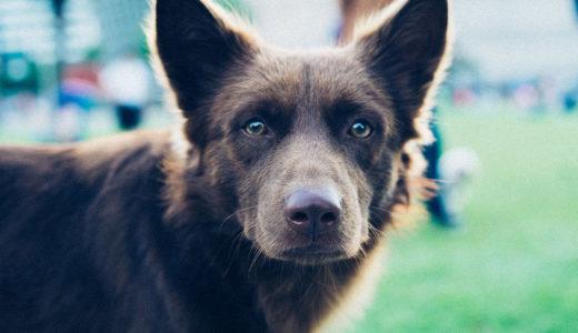 犬も人間のように風邪をひくの?インフルエンザにかかるの?