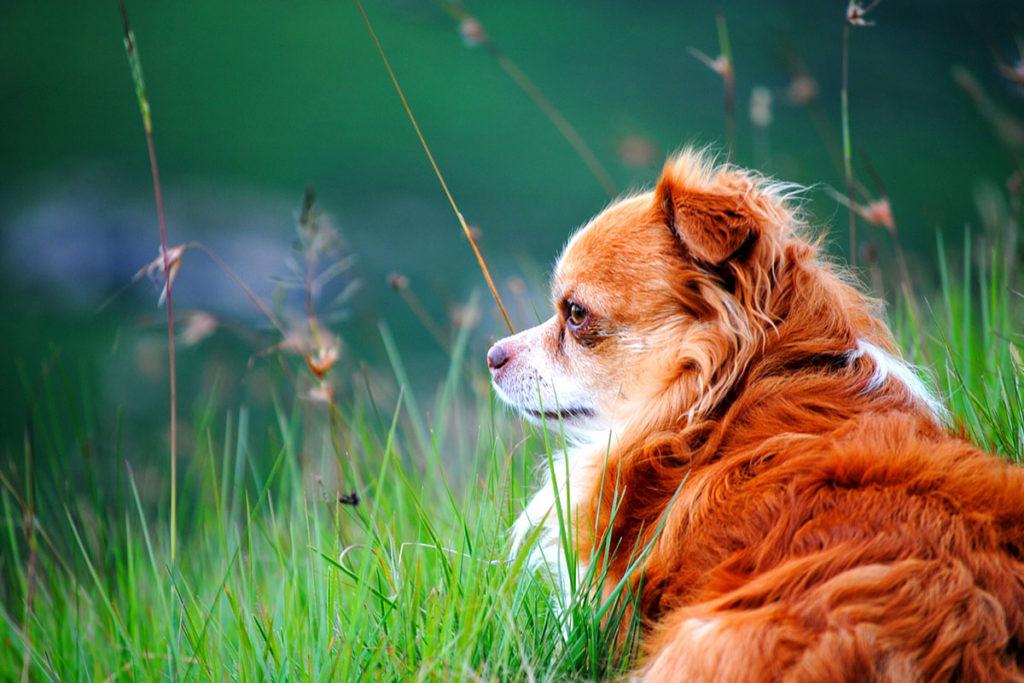 犬の血液型のお話|そもそもワンちゃんに血液型はあるの?