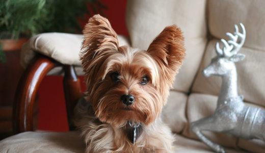 犬がうるさい理由を知ろう|無駄吠えを防ぐには?