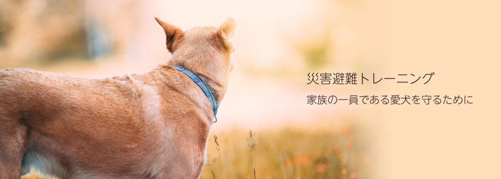 東京の世田谷区と文京区にある犬のしつけ経室、ドッグホテル犬のしつけハグの災害避難トレーニング