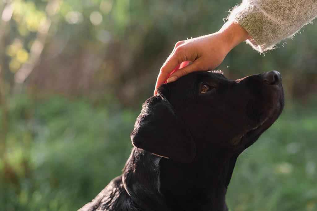 犬をダメにする飼い主の行動!興奮した犬についやってしまうダメな方法とは?