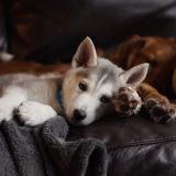 子犬の夜鳴きを止めさせたい!夜鳴きの原因と対処方法