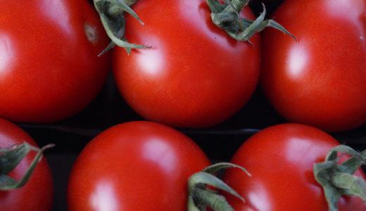 犬にも嬉しいトマトの効果!トマトを使った手作りレシピ