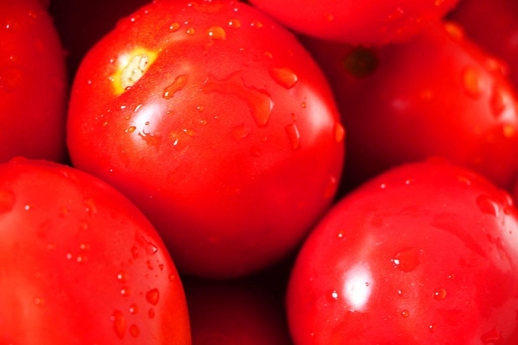 犬にも嬉しい生トマトの効果!アレルギー対策 トマトを使った手作りレシピ