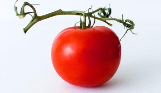 犬はトマトを食べてもいいの?トマトジュースを与える時の注意点は?