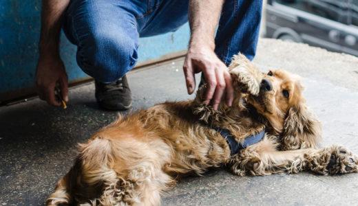 愛犬を早死にさせる可能性がある飼い方とは?今日から辞めたい飼い方5選
