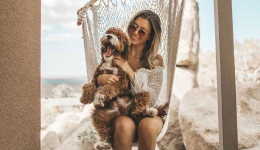 犬の性格は飼い主に似ることが判明!生活に影響される?
