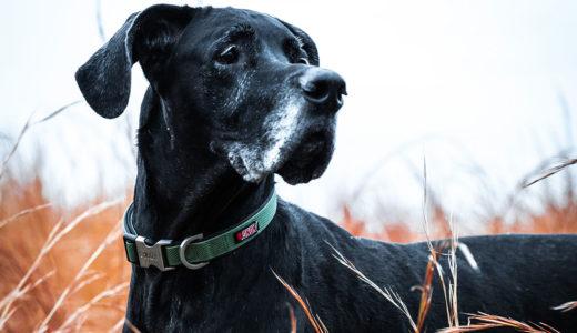 犬の寿命は14.4歳 飼い犬が長く生きる秘訣