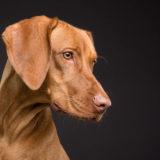 死亡する恐れもあります!犬の誤飲例と対処方法