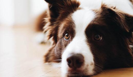 よくある犬の誤飲トラブル!|本当に飲んだときはどうするの?