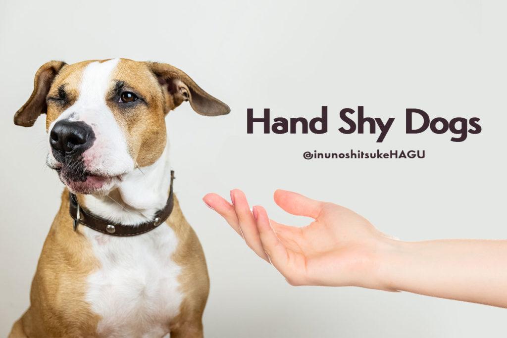ハンドシャイとは?|犬が人間の手を怖がる原因と対処方法