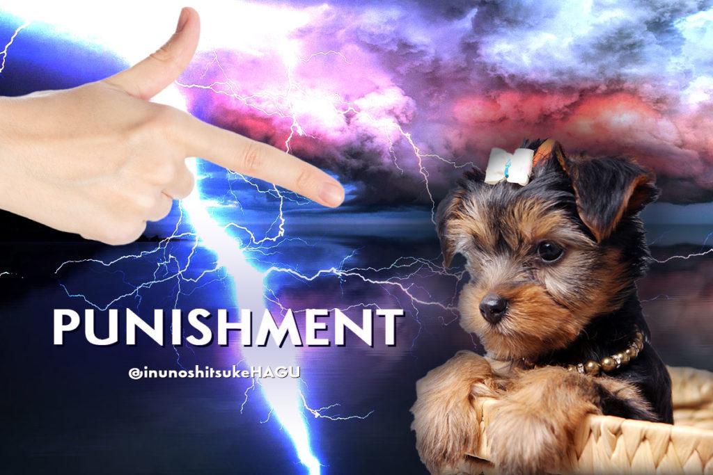 犬のしつけの仕方の一種「天罰方式」とは?|人間の精神状態は?