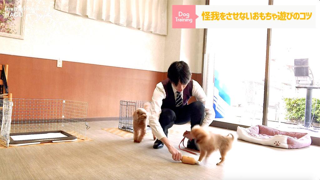 新型コロナ対策!室内で出来る犬の運動・ストレス解消法3選